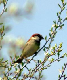 Bird photogphy, nature scenery, wildlife pictures, animal photography, countryside photography, wall art decor, wall decor gifts by Suzannasi on Etsy