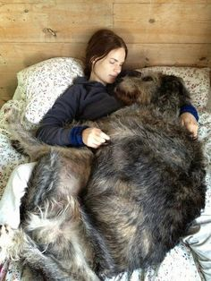 Irish Wolfhound. The ultimate big dog.
