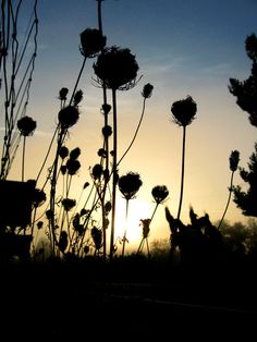 Silhouette #photography