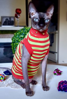 Our+Posh+Punk+Sphynx+Line+is+made+from+breathable,+soft+stretch+fabrics+and+lots+of+LOVE.+They+have+the+comfort+that+your+Sphynx+will+love+and+Style+that+ROCKS!  This+style+is+a+medium+weight+fabric+with+red+trim+and+studded+gold+neckline. It's+Purr+-fect!+  Available+in+Large+&+Medium.  S...