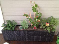 Herb garden outside the kitchen door