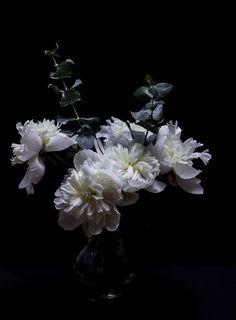 White Peonies & Eucalyptus © Amanda Simonelli