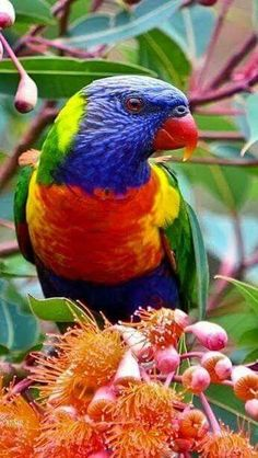 "Mug shot for Craig Buckner and his macaw, ""Bird. – A macaw named ""Bird"" is an instant Pretty Birds, Beautiful Birds, Animals Beautiful, Cute Animals, Tropical Birds, Exotic Birds, Colorful Birds, Exotic Pets, All Birds"