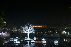 Sparkling lights illuminate the Southeast Botanical Gar […] Sparkling Lights, Okinawa, Botanical Gardens, Night Life, Places To See, The Incredibles, Japan, Island, Explore