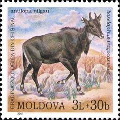 Nilgai (Antelope) World Wild Life, Stamp World, Zoological Garden, Coaster Design, Animals Images, Advertising Poster, Stamp Collecting, Postage Stamps, Mammals