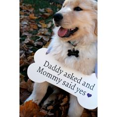 Dog Bone Wooden Sign Save the Date Engagement Photos Photo Prop 5 X 12... ($21) ❤ liked on Polyvore featuring decorations, grey and weddings
