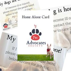 Dog Emergency Card Dog Home Alone Pet Care Kit Pet