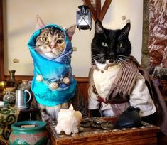 Proof Cats Are Cool Even in Costumes Crazy Costumes, Pet Costumes, Cat Cosplay, Elder Scrolls, Cool Cats, Cat Art, Cat Lovers, Cute Animals, Kitty