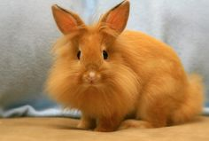 My three major obsessions all rolled into one little furry friend: ginger, fluffy, and a rabbit:)