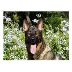 Customizable German Shepherd Dog Postcard - postcard post card postcards unique diy cyo customize personalize