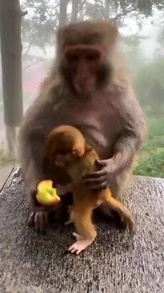 Cute Little Animals, Cute Funny Animals, Cute Dogs, Funny Monkeys, Cute Animal Videos, Funny Animal Pictures, Weird Pictures, Baby Animals Pictures, Animal Pics