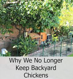 Why We No Longer Keep Backyard Chickens