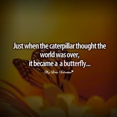 inspirational quotes | inspirational quotes - Just when the caterpillar