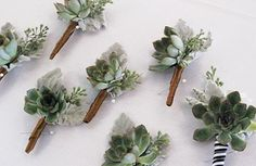 The other boutonnieres will be pale green succulents with seeded eucalyptus wrapped in raffia with the stems showing