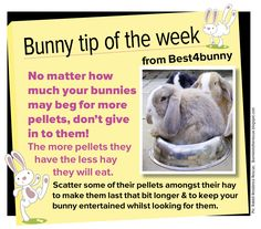 Bunny tip - week 17 No matter how much your bunnies beg for more pellets, don't give in to them!