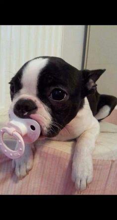 Cute lil puppy