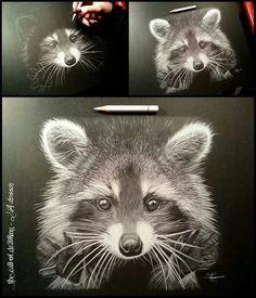 Raccoon - White pencil on black paper