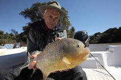 Jeremy Wade with large piranha on a backwater of the Parana River, possibly Serrasalmus maculatus. -  Image Credit: DCL