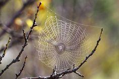 Crean violín con cuerdas de seda de araña