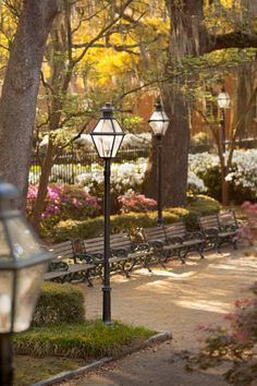 hueandeyephotography    Street Lamps, College of Charleston Campus, Charleston, SC  © Doug Hickok  All Rights Reserved