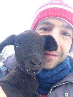 Pecore Jura