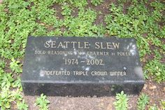 """Seattle Slew - Racehorse. The 10th Triple Crown Winner, he was known as """"The People's Horse."""" He was the legendary winner of the 1977 Triple Crown who became one of racing's greatest sires. Purchased for only $17,500, he won 14 of 17 races and earned $1,208,726 during his career."""