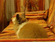 ニヤニヤが止まらないウサギ画像(GIF) : ハムスター速報