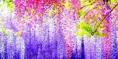 Japan nature HD Wallpaper - DamnWallpapers