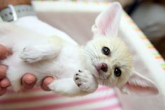 12 Actual Animals To Look At Until The Pok�mon Go Servers Come Back Online