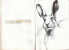Hare (by Jesamine Kelly)