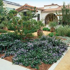 Front Yard Garden Design Water-wise front yard - Landscaping without Grass - Sunset Mobile - See how to ditch thirsty turf grass in favor of beautiful, easy-care gardens Low Water Landscaping, Front Yard Landscaping, Landscaping Ideas, Landscaping Software, Landscape Design, Garden Design, Courtyard Design, Contemporary Landscape, Landscape Arquitecture