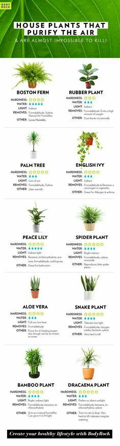 #houseplantsairpurifying