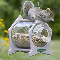 Squirrel feeders and squirrel houses.  Would love to watch them inside the jar.