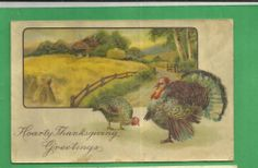 Thanksgiving Vintage Postcard Tom Turkey Hen Field   eBay