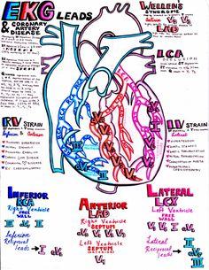 Nursing School Notes, Medical School, Nursing Schools, Cardiac Nursing, Pharmacology Nursing, Emergency Medicine, Medicine Notes, Student Studying, Med Student