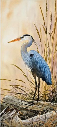 Great Blue Heron Shore Painting by James Williamson - Great Blue Heron Shore Fine Art Prints and Posters for Sale Watercolor Bird, Watercolor Paintings, Watercolors, Painting Art, Bird Paintings, Fine Art Paintings, Lake Painting, Blue Heron, Wildlife Art