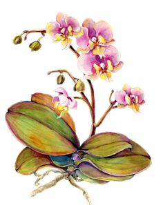 Orchid Phalaenopsis Hasing Amy 5 Card Set by amberRturner on Etsy, $20.00