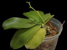 Great orchid care advice.