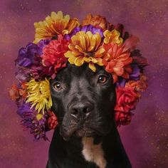 Doggies with flowers