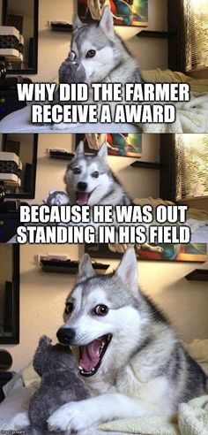 Bad Pun Dog http://ibeebz.com