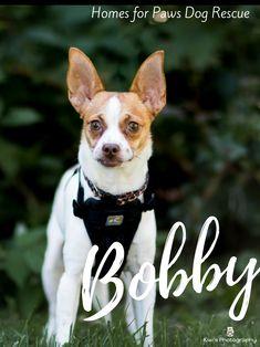 Homes For Paws Dog Rescue Ottawa