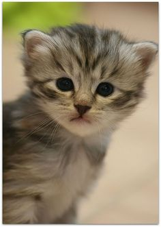 One of my cousins' kittens, they are so cute! :)   Best Dog Coverage! http://www.offers.couponrainbow.com/embrace-pet-insurance/