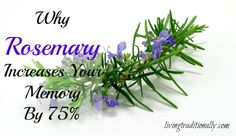 Why Rosemary Increases Your Memory By 75%  To order DoTerra oils go to www.mydoterra.com/daniellequinones/