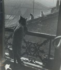 punlovsin:  Réunion de chats by Édouard Boubat 1948