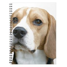 beagle notebook  puppy dachshund, beagle meme funny, puppy stuff boy #beagle #pets #puppy, back to school, aesthetic wallpaper, y2k fashion Beagle Puppy, Corgi, Aesthetic Wallpapers, Dachshund, Back To School, Funny Memes, Puppies, Pets, Animals