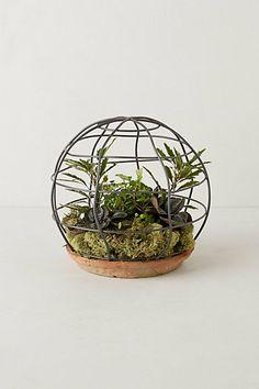 spherical trellis terrarium
