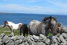 Horsing around in #Ireland on a biking vacation with VBT.