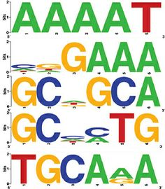 Figure 1 from Genome-wide Identification and Characterization of Transcription Factor Binding Motifs of NBS-LRR Genes in Rice and Arabidopsis, published in Journal of Genomes and Exomes http://www.la-press.com/article.php?article_id=4090