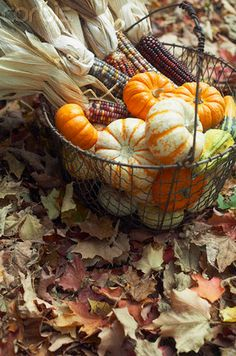 Colorful gourds and Indian corn in a wire egg basket makes the perfect Fall decoration!