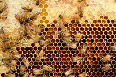 Lessons from the Hive :: First Year Experiences in Beekeeping